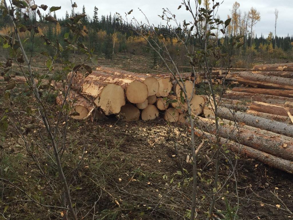 2016-2017 Logging Season